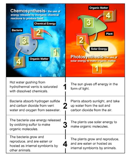 Noaa ocean explorer education multimedia discovery missions the diagram below compares examples of these two processes chemosynthesis in a seafloor hydrothermal vent ccuart Gallery