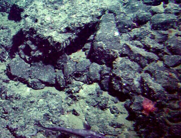 Exploring Alaska's Seamounts: Seafloor on Patton Seamount