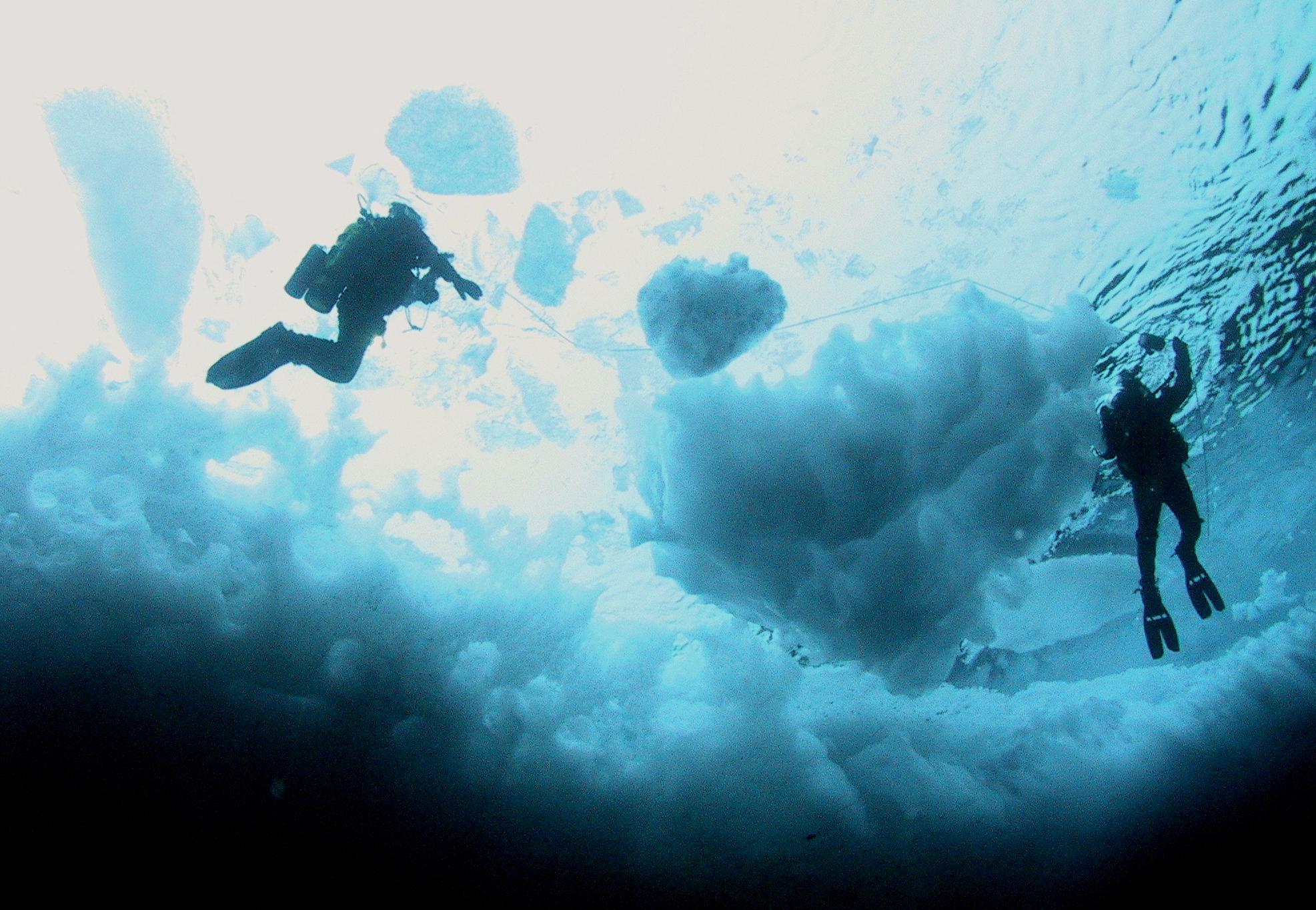 Why Do We Explore Submarine Fiber Optic Cable Magnified Fop 2011 Hirez 22 Diver