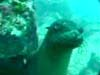 A video of a brief encounter with a Galapagos sea lion