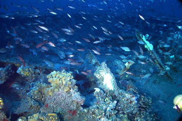 Noaa ocean explorer monitor expedition 2002 fish over for Ocean explorer fishing