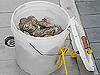Carrion trap baited with rotting oyster.