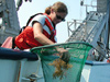 Dip netting for Sargassum off the ship's stern.