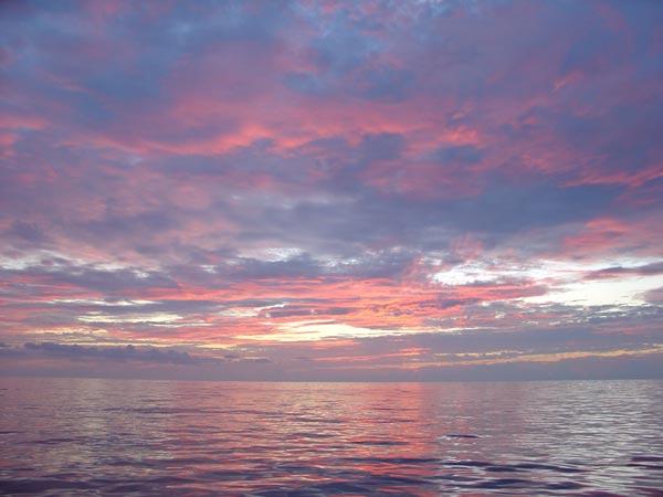 ca4897031b26b NOAA Ocean Explorer  Gulf of Mexico Deep Sea Habitats  A spectacular ...