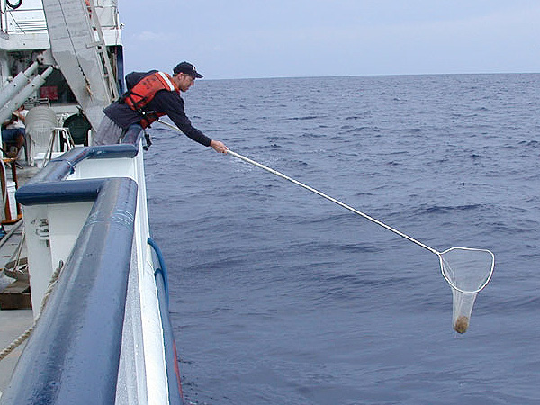 Related keywords suggestions for dip net for Long handle fishing net