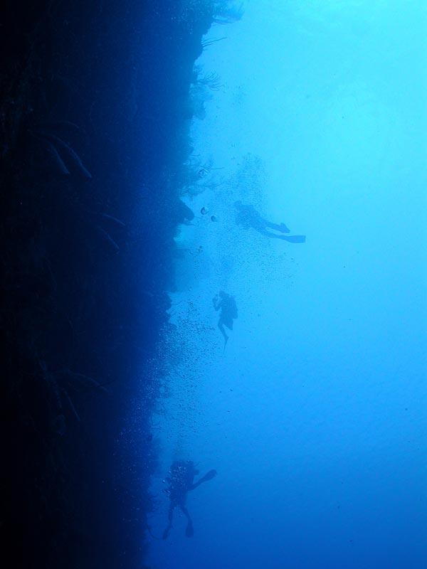 NOAA Ocean Explorer: Cayman Islands Twilight Zone 2007