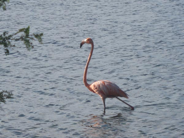 Not commonly encountered by researchers on a ship the pink flamingos