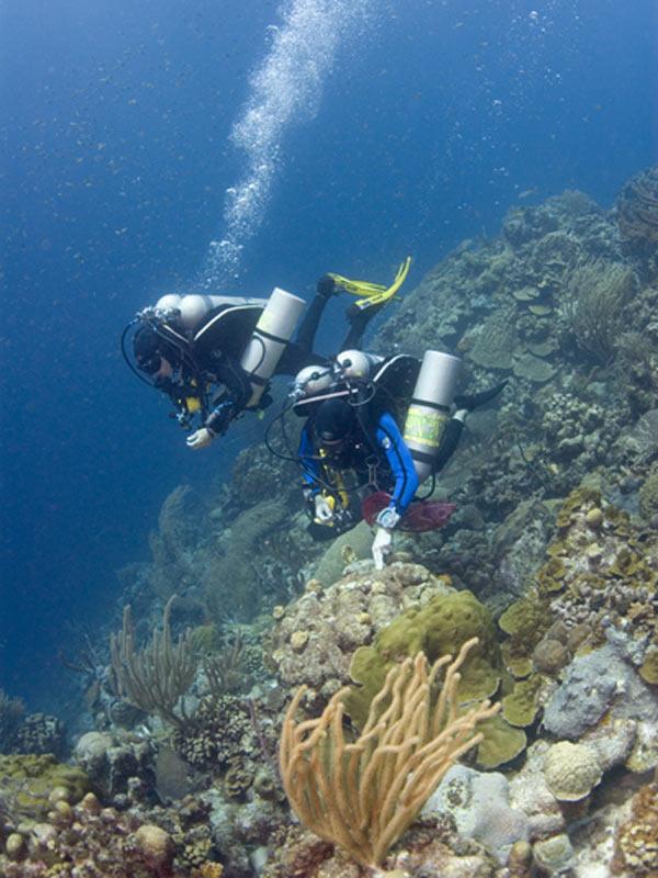 Tri Mix Scuba Diving : Noaa ocean explorer bonaire exploring coral reef