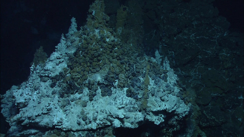 Snails cluster around the base of a hydrothermal vent chimney at Mata Tolu.