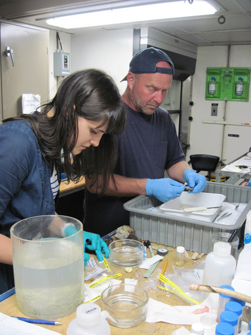 Anabel Martinez and Dr. Tim Shank (Woods Hole Oceanographic Institution) process samples after collection by the ROV.