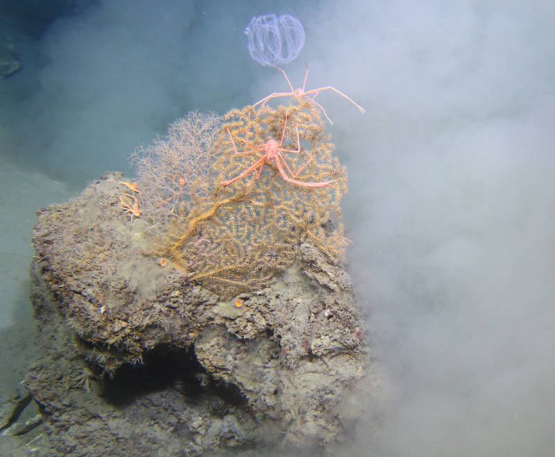 July 26: Crabs, Lobsters and Shrimp, Oh My!: The Evolution of Light Detection in the Deep Sea