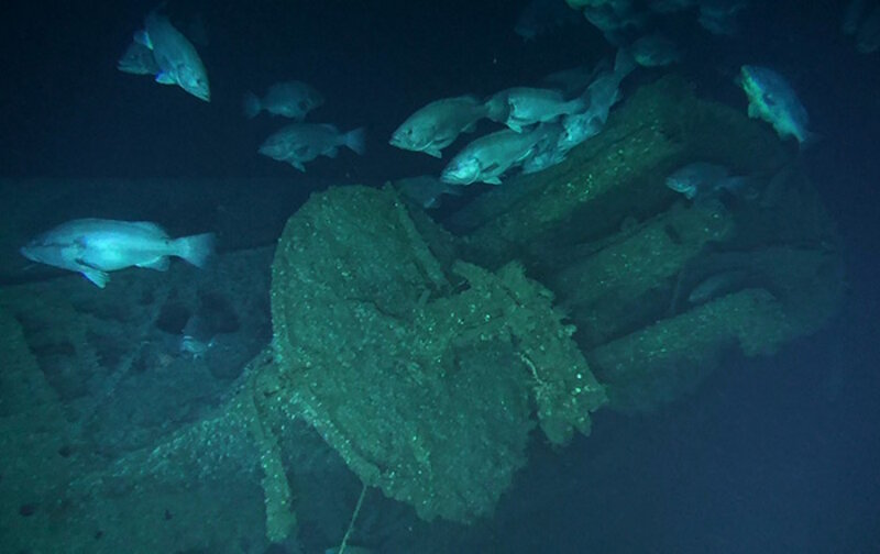 Grouper congregate around the conning tower of the U-576. The structure on the seafloor forms a reef that provides fish with protection and food.