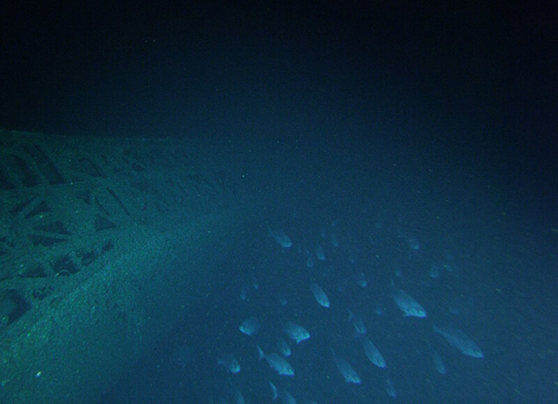 School of silvery fish glides above the deck of the U-576.
