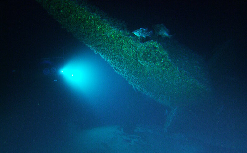 Lights from the submersible illuminate several different types of grouper on the stern of the U-576.