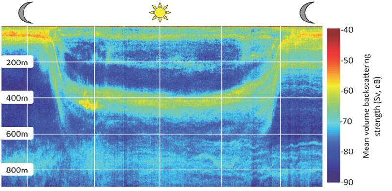 Echogram illustrating the ascending and descending phases of the diel migrations through the water column. The downward and upward migration activity occurs during crepuscular periods. The color scale maps to acoustic scattering intensity.