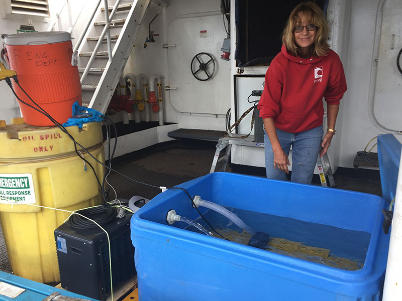 Sandra Brooke, Associate Research Faculty at Florida State University's Coastal and Marine Lab, admiring coral samples collected by remotely operated vehicle Odysseus from NOAA Ship Nancy Foster.