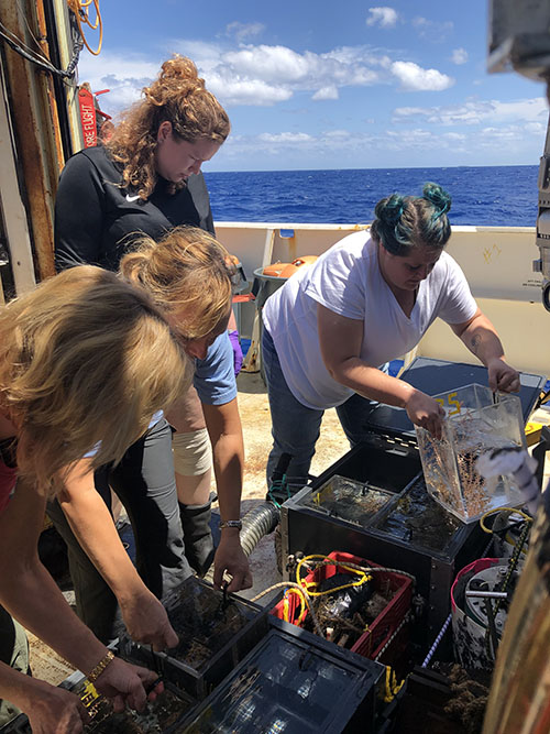 Alexis Weinnig (right) lifts one of the clear plastic inserts out of the biobox on ROV Jason's sample basket. When the ROV comes to the surface, all corals are quickly transported to the ship's cold room, where they'll be kept until the end of the cruise.