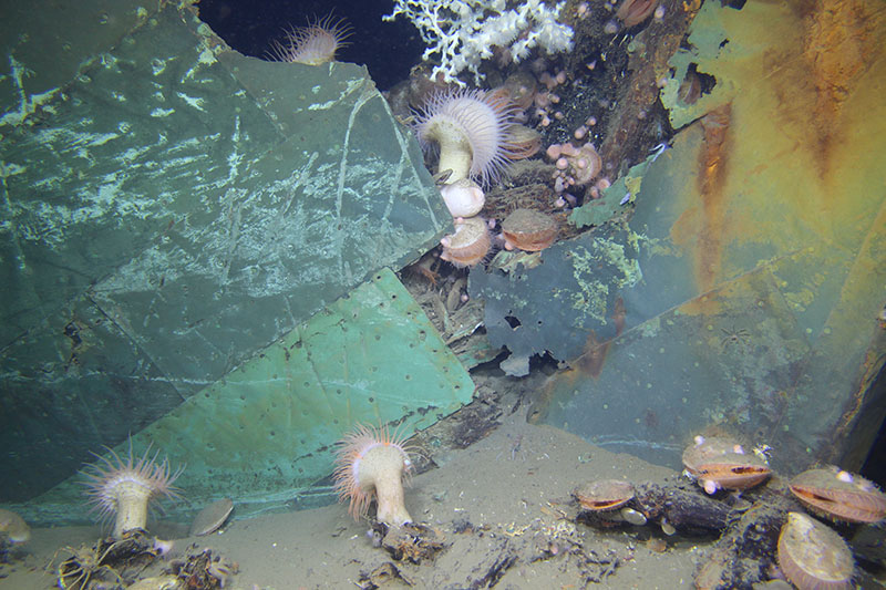 The 19th-century wooden-hulled Ewing Bank wreck demonstrates that shipwrecks attract diverse fauna even in 2,000 feet of water.