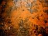 Orange bacterial mat