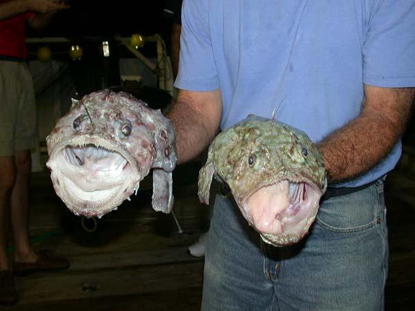 anglerfishes