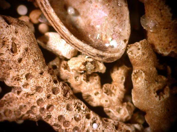 The coarse material in the sediments surrounding the rocks is mostly ...