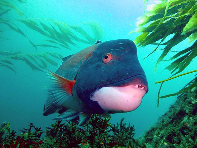 Ocean exploration 2020 national forum ocean exploration for California fish planting