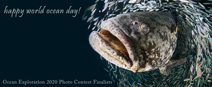 Happy World Ocean Day! Ocean Exploration 2020 Photo Contest Finalists | Photo by Laura Rock