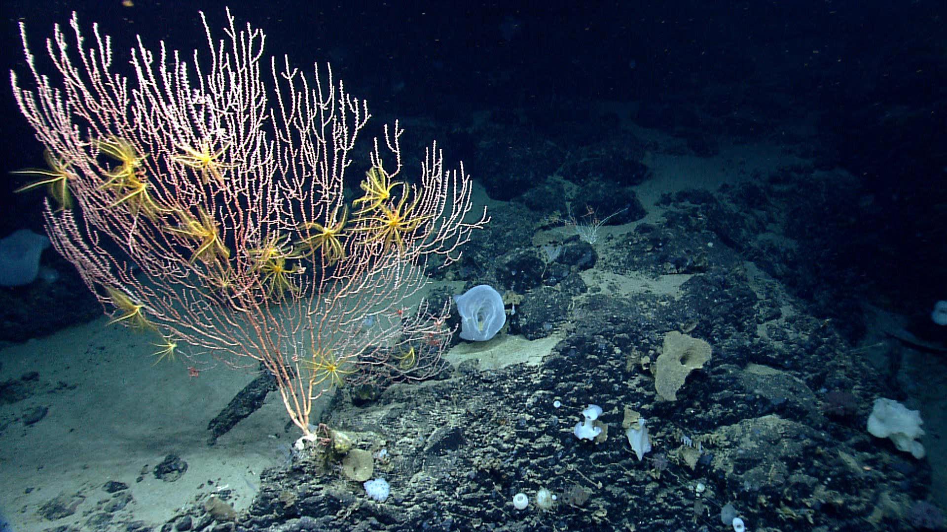 NOAA Ocean Explorer: Education: Seamounts
