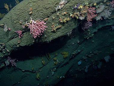 Hydrographer Canyon proved to be a diverse habitat for deep-sea corals.
