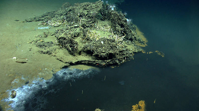 On Dive 02 of the 2014 Gulf of Mexico Expedition, ROV Deep Discoverer found an interesting brine pool.