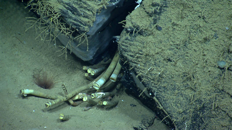 Chemosynthetic tube worms led scientists to believe that there was more to this site than what we could see.