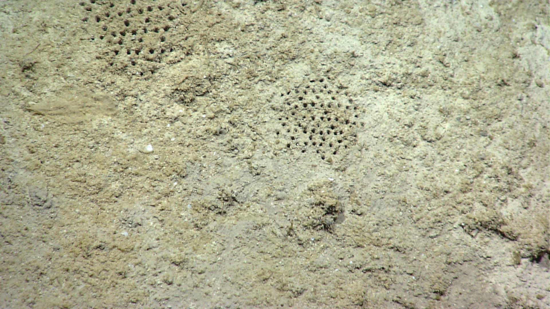 岩層中生物鑽孔的生痕,成了地質學家標記寒武紀的起點。