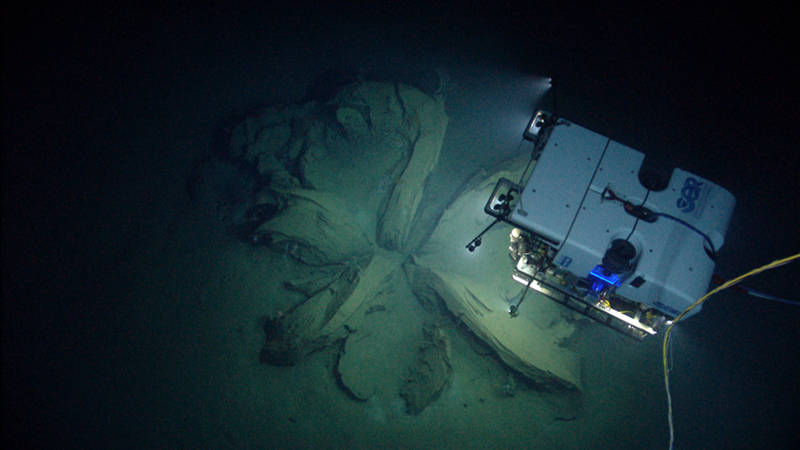 As ROV Deep Discoverer (D2) explored a dive site with a number of methane seeps, D2 imaged something truly exciting—a potential hydrate tube with both oil and gas bubble seepage.