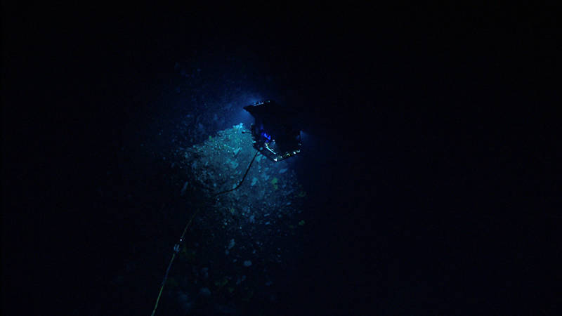 D2 descends on seafloor densely populated with a diversity of deep-sea corals and sponges.