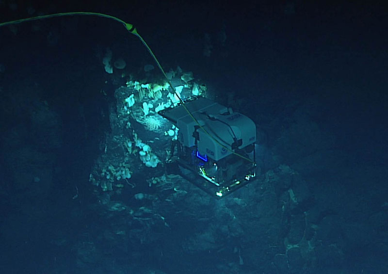 ROV Deep Discoverer imaging a high-density community that included several species that are likely new to science during the 2016 expedition to the Monument.