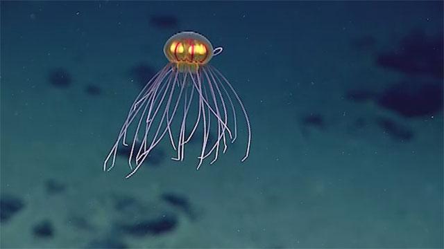 Happy World Jellyfish Day