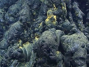 On Dive 9, we dove on a new pillow lava flow. Comparison of bathymetry collected in 2013 and 2015 indicated an eruption over 100 meters thick. We visited three pillow mounds that were composed almost entirely of glassy pillow lavas. The glass forms when molten lava erupts on the seafloor and comes in contact with very cold seawater, immediately quenching the lava, forming long tubular or round shapes, and creating glass. The glass is important for geochemists because it allows them to determine the composition of the erupting lava.