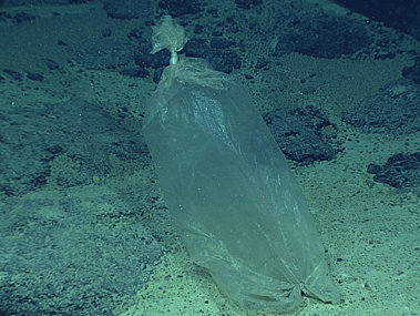 A plastic ice bag, likely blown overboard from a fishing vessel, was also found at Enigma Seamount.