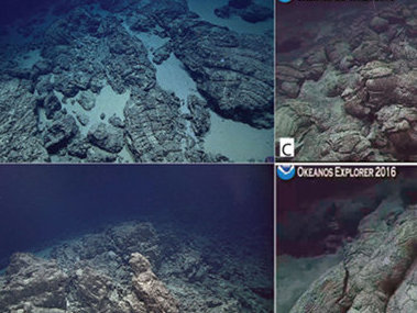 Screenshots of the seafloor observed during remotely operated vehicle dives on Fina Nagu Dive 5(3A, B), dive 6 (3C, D), and Dive 7 (3E, F).