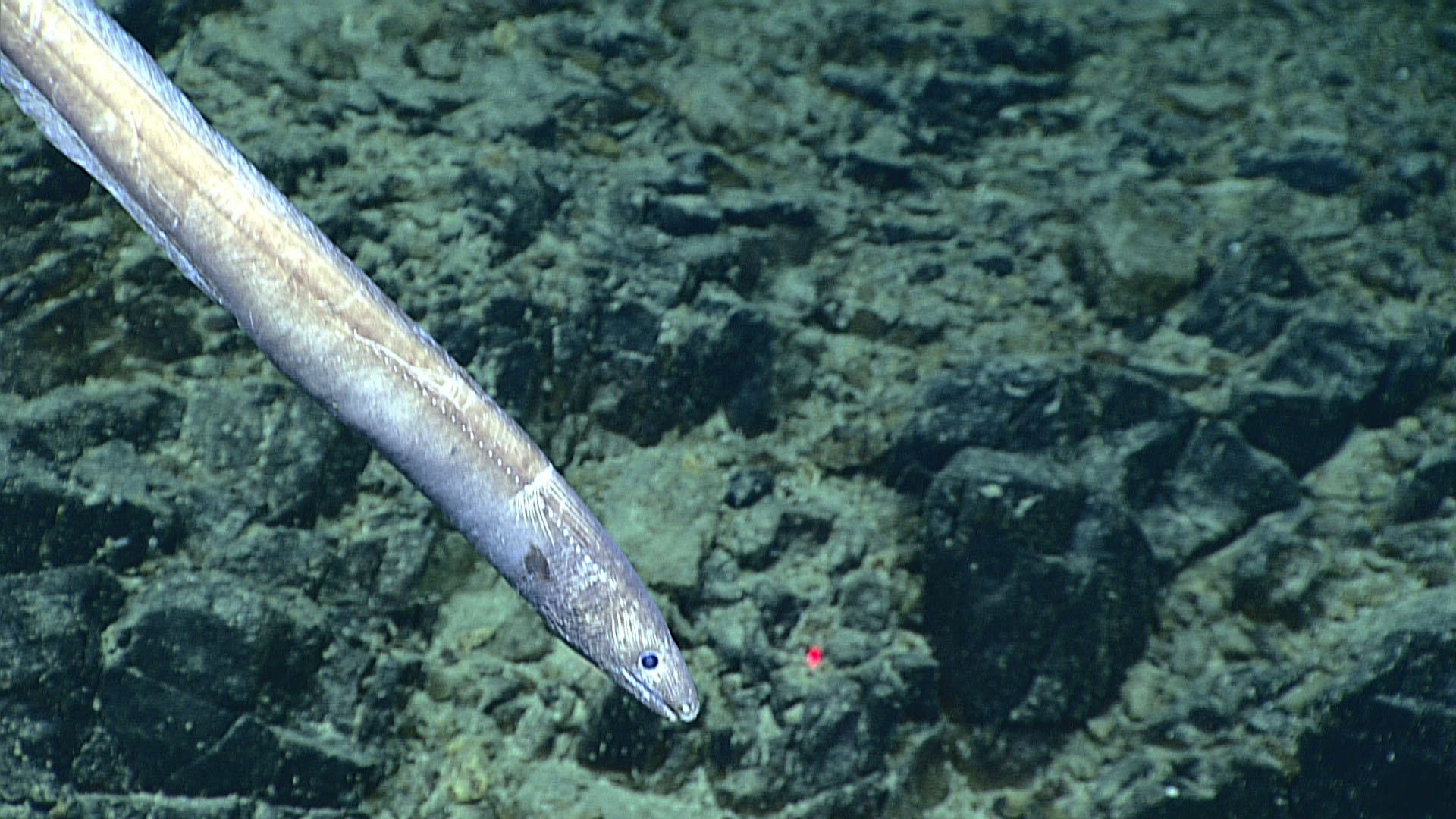 2016 deepwater exploration of the marianas mission logs july 6