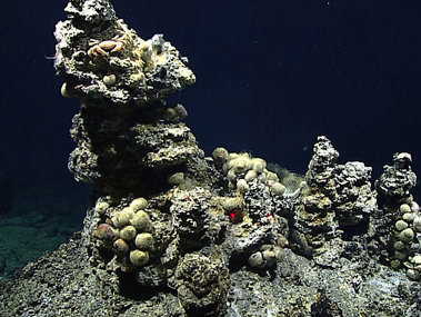 "Small (approximately one meter tall) hydrothermal chimney with ""hairy snails."""