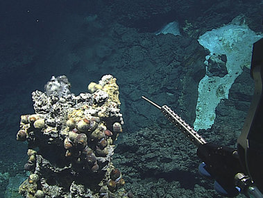 ROV Deep Discoverer preparing to insert a thermometer into a Chamorro chimney.