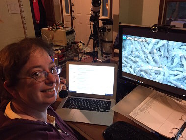 Tara Harmer Luke, Associate Professor of Biology at Stockton University, watching a swarm of hydrothermal vent shrimps on her home computer.