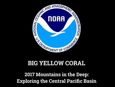 [video] Dive 04: Big Yellow Coral