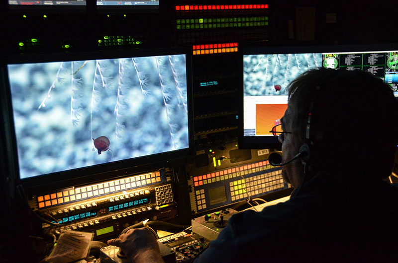 Global Foundation for Ocean Exploration Video Engineer Roland Brian adjusts the zoom, focus, and lighting on remotely operated vehicle Deep Discoverer's main HD camera to obtain the best shot of a tiny jellyfish.