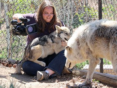 Annie White working with wolves at the Mission Wolf sanctuary.
