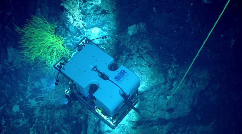 During the expedition, NOAA's ROV Deep Discoverer will be used to acquire high-definition visual data and collect limited samples in poorly explored areas near the boundaries of Papahānaumokuākea Marine National Monument and in the Musicians Seamounts.