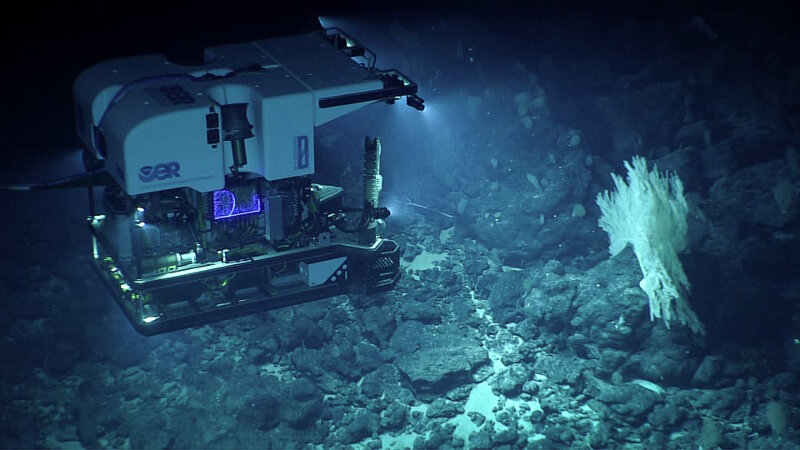 View of remotely operated vehicle Deep Discoverer investigating a large primnoid coral colony.