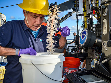 Dr. Chuck Messing pulls a carnivorous cladorhizid sponge sample out of Deep Discoverer's biobox.