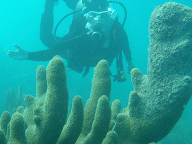 LT Abbitt behind a beautiful crop of Dendrogyra cylindrus (pillar coral) at Sand Key Sanctuary Preservation Area, six miles south of Key West.